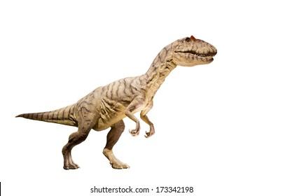 Restoration of an Allosaurus (Allosaurus fragilis) dinosaur isolated.