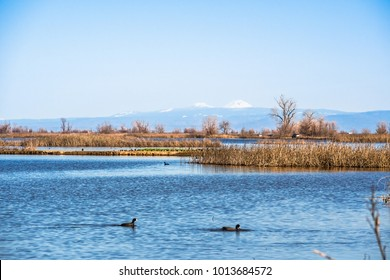 Restored ponds and marshes in Sacramento National Wildlife Refuge on a sunny day, California