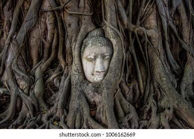 Resultados de la búsqueda Buddha Head in Tree Roots, Wat Mahathat, Ayutthaya, Thailand