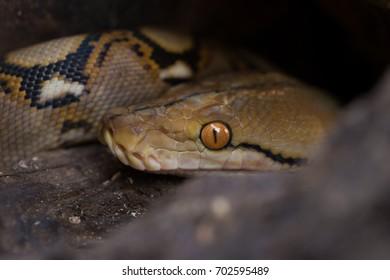 Snake Shedding Skin Images, Stock Photos & Vectors