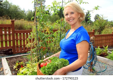 Retired woman in the vegetable garden holding a basket of freshly picked lettuce and tomatoes.