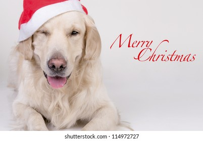 Retriever Christmas card