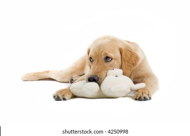 retriever labrador laying down on the ground and playing with a stuffed toy