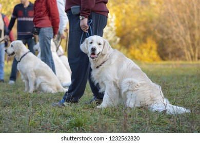 Retriever with the owner in the Park