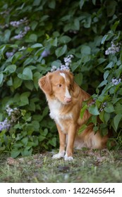 Retriever sitting with head down, looking to the side with guilty expression in the park, green background, summer