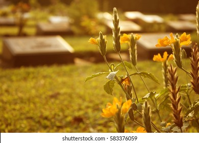 retro of cemetery with yellow flowers