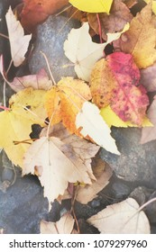 A retro film style photo of autumn, fall, warm, New England leaves fallen on the rocky ground of a lake.
