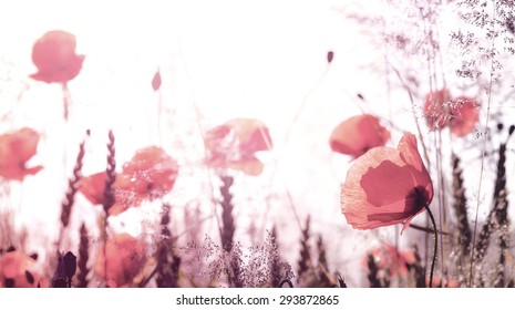 Retro filtered picture of summer meadow with poppy flowers, shallow depth of field.