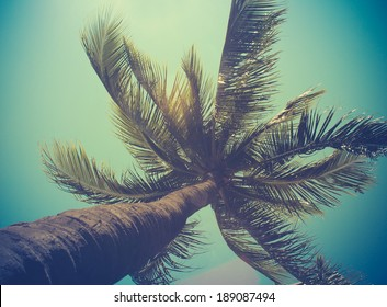 Retro Filtered Single Palm Tree In Hawaii