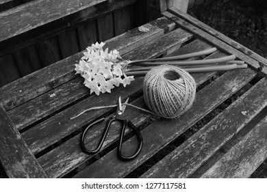 Retro flower scissors cutting garden twine, next to a bunch of white narcissi flowers on a wooden bench - monochrome processing