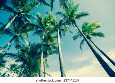 Retro image of Palm trees low angle view.