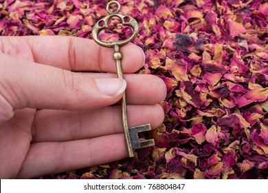 Retro key in hand  on background of dried  rose petals