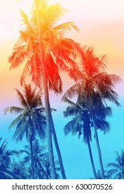 Retro photo of a beautiful of palm trees on a tropical island