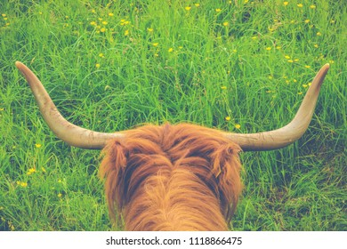 Retro Style Image Of A Scottish Highland Cow In A Meadow With Copy Space