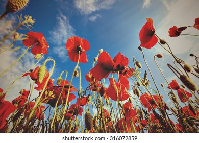 Retro style photo of red poppy field over blue sky