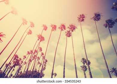 Retro stylized palms silhouettes at sunset with flare effect, Santa Monica, USA.