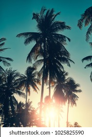 Retro stylized toned picture of coconut palm trees silhouettes at sunset, vacation concept.