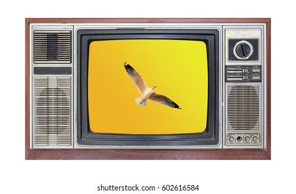 Retro television on white background with image of seagull flying in sky on screen