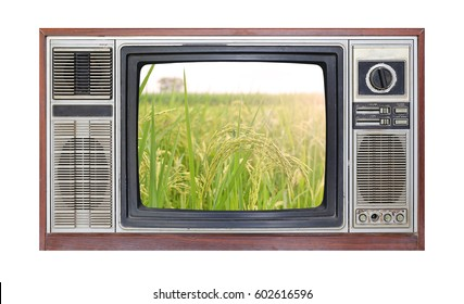 Retro television on white background with image of rice field on screen