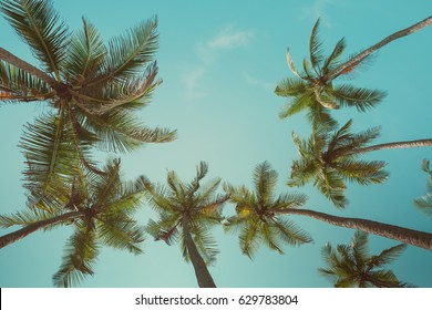 Retro toned palm trees with sky as copy space