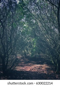 Retro / vintage mystic nature background - a path going through the trees and bushes