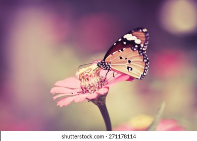 retro and vintage tone butterfly on pink flower in the garden on sunny day