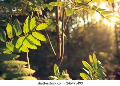 Retro-styled backlit leaves at forest