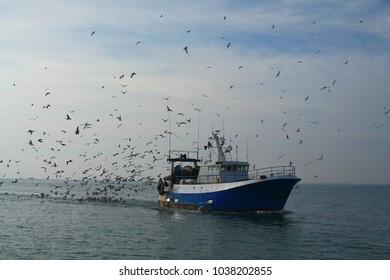 Return of fishing in Grau du Roi , a resort on the coast of occitanie region in France