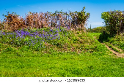Returning to Great dixter in east sussex after a long walk with the church steeple in the background and bluebells along the hedge