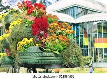 Reuse of tires-overalls with plants and flowers decorative-environmental education-preserving nature