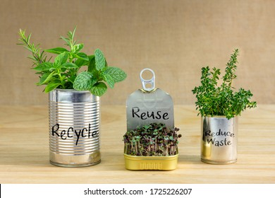 Reused tin cans containing herbs and growing salad greens with Recycle, Reuse, Reduce waste text written on cans. Zero waste at home, save money, recycle and grow your own food.