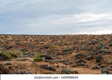 The re-vegetated but still stark and desolate landscape of Cape Bridgewater near Portland in Victoria Australia