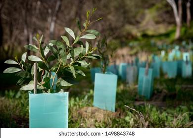 Revegetation  Planting trees in areas that need revegetation in Australia