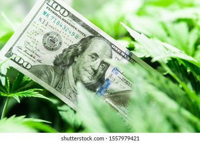 Revenues in the marijuana industry and the medical industry. American dollar bill on cannabis leaves. Taxation and marijuana. The economy of hemp industry. Tax on weed. Money and pot. Cannabis finance
