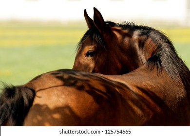 reverse horse head
