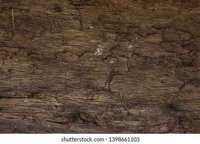 The reverse side of the tree bark is bright and brown with cracks and thin slivers. Background for design. Concept of wildlife.