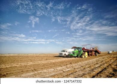 Rexburg, Idaho, USA Oct. 9, 2012- Farmers and field hands use farm machinery in the field harvesting potatoes.