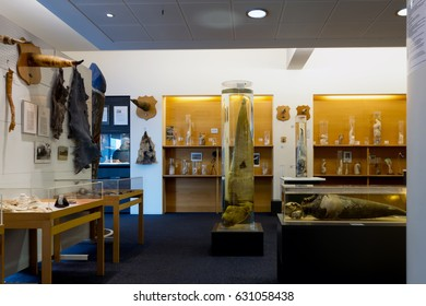 REYKJAVIK, ICELAND - APRIL 15 2017: Icelandic Phallological Museum, founded in 1997, houses the world's largest display of penises and penile parts.