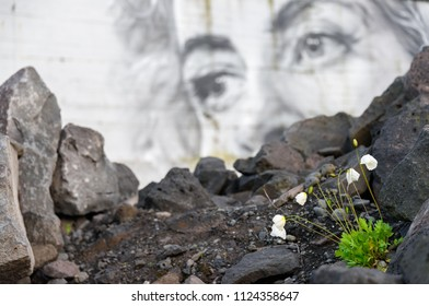 REYKJAVIK, ICELAND – JUNE 3, 2017: Small white poppy flowers and buds blooming in the urban wasteland with female eyes of a  mural on the background in the Western parts of Reykjavik, Iceland.