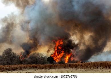 Rhea Oklahoma Wildfire
