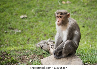 Rhesus Money Waiting alongside Road