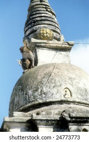 Rhesus monkey,  Swyambudnath Temple above Kathmandu,  Nepal, Asia