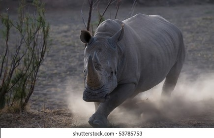 Rhino charging with dust