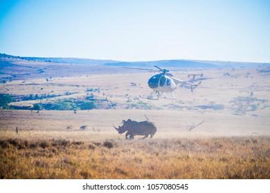Rhino darting from a chopper