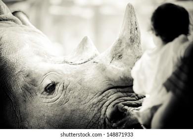 Rhino eyes contact