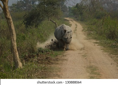 Rhino are going to run the car angry travelers.