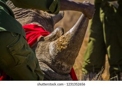 Rhino horn in africa
