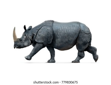 Rhino isolated on white backgroun