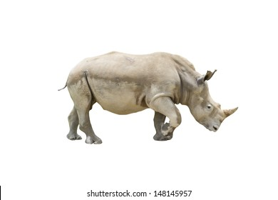 Rhino isolated on white background with clipping path