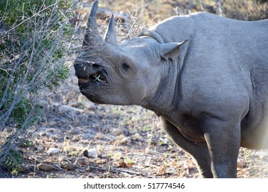 Rhino in the Kruger National Park, South Africa